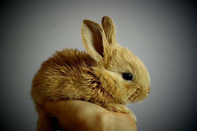 zrzavý králíček na ruce