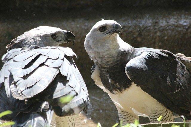 velký ptáci