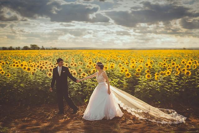 novomanželé u slunečnic