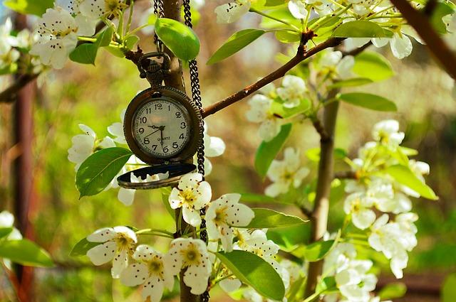 kapesní hodinky na rozkvetlé větvi