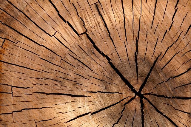 dřevo – průřez kmenem.jpg