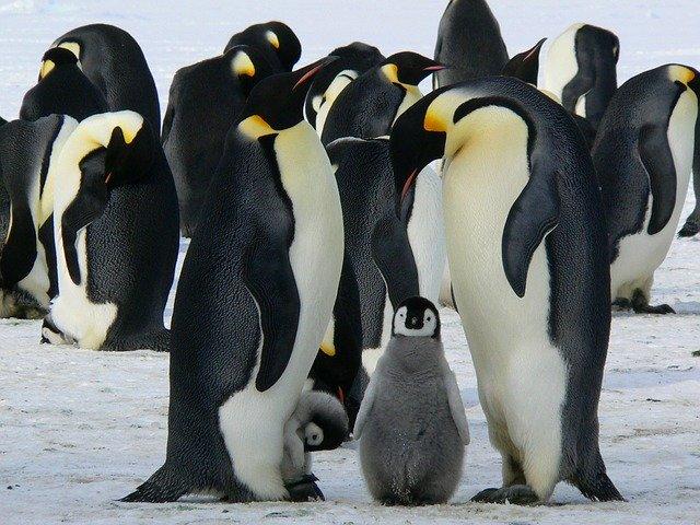 tučňáci.jpg